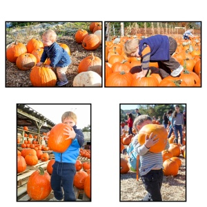 Picking Pumpkins over the Years