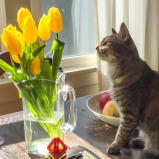 Here is the moment when our one-year-old cat discovered these spring tulips. You can almost see the neurons in her brain going crazy.